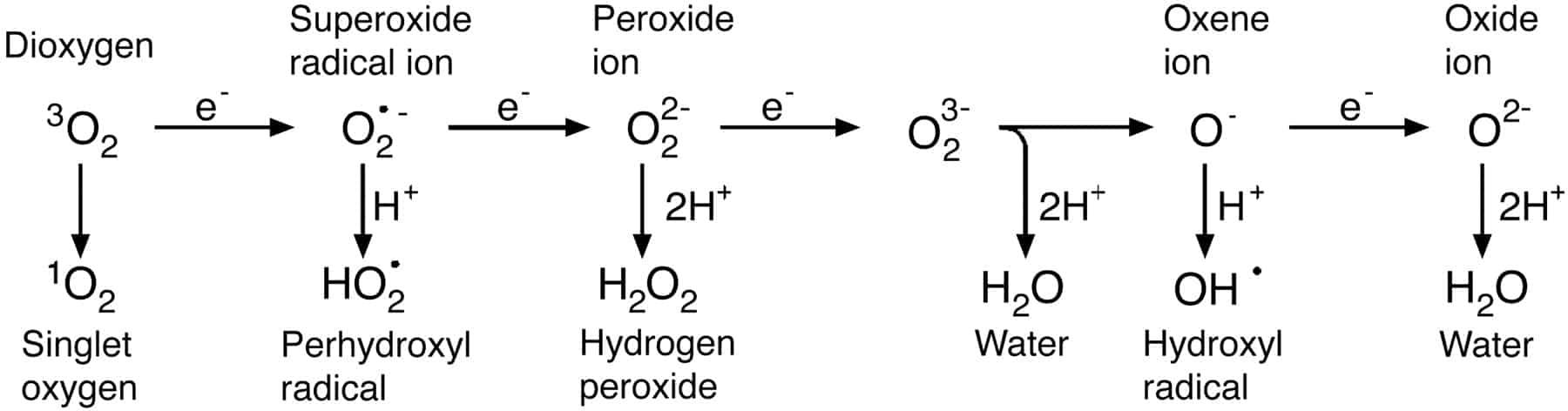 NUGENIS Reaktive Sauerstoff Spezies (ROS)