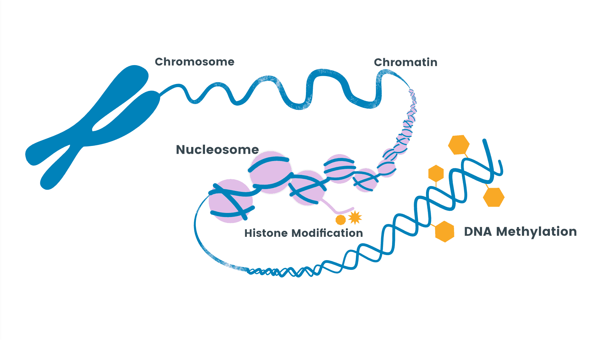 DNA Methylation - NUGENIS supports the DNA Methylation with Applied Epigenetics