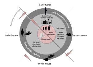 Maternal paraben exposure triggers childhood overweight development